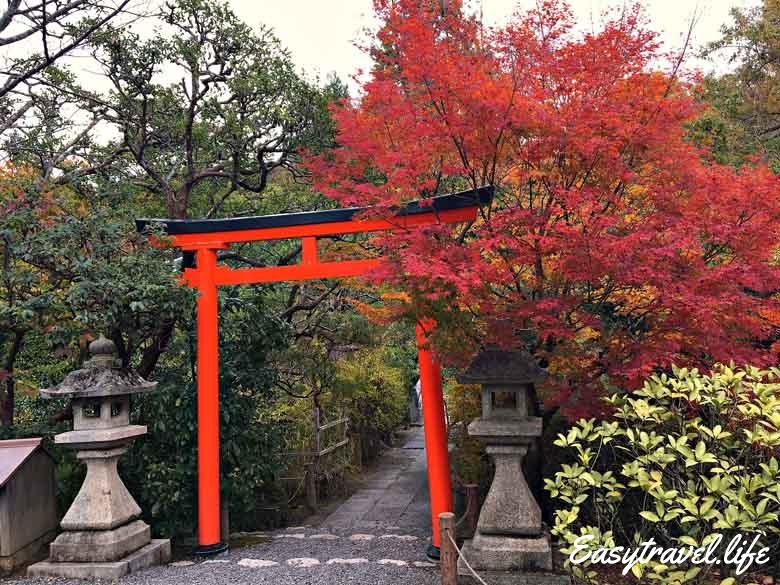 red tree japan