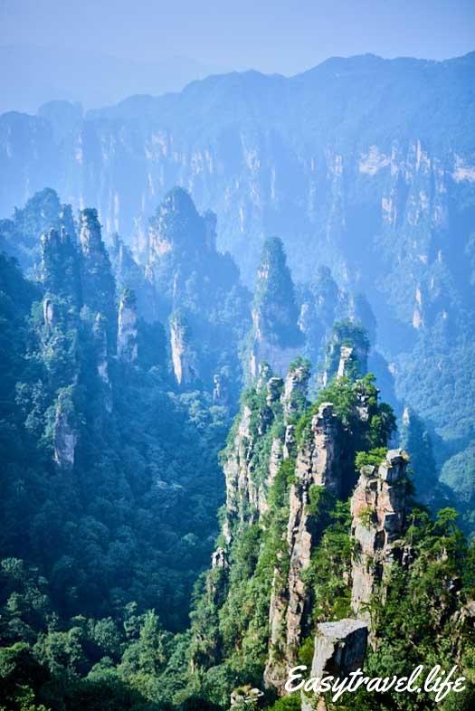 Stone Peak Forest